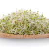 Alfalfa Sprout in basket on white background