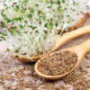 Fresh alfalfa sprouts and seeds – closeup.
