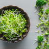 Broccoli Sprouts with Florets