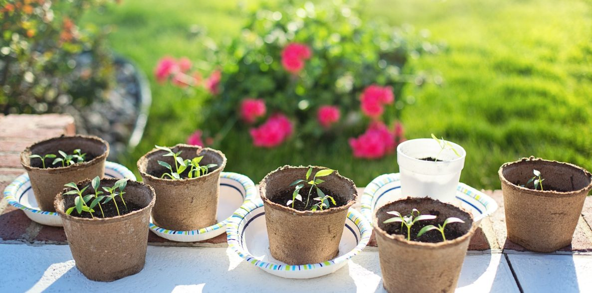 10 Easy DIY Home Sprouting Kits
